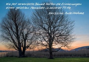 Bild von Trauer: Bäume