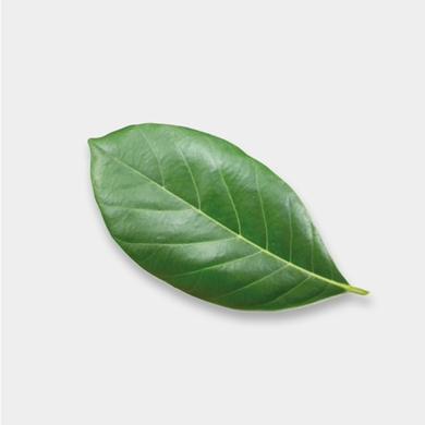 Bild für Kategorie Nachhaltigkeit